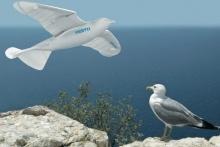 SmartBird - робот-чайка