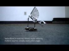 Embedded thumbnail for Робот-таракан запускает в полет робота-стрекозу