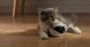 Игрушка для домашних питомцев на сайте Kickstarter